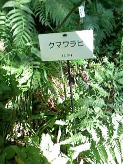 札かけされた植物